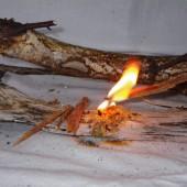 Allume feux, bois gras, fat wood survie